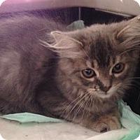 Adopt A Pet :: Febie - Dallas, TX