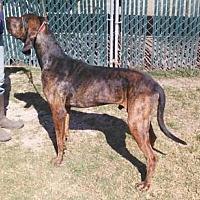 Hound (Unknown Type) Mix Dog for adoption in Seguin, Texas - Charlie Parker