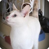 Adopt A Pet :: Polly - Fairborn, OH