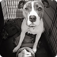 Adopt A Pet :: Hayley**READ ENTIRE PROFILE** - Spokane, WA
