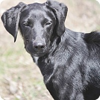 Adopt A Pet :: Scone - Cranston, RI