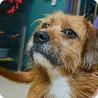 Adopt A Pet :: Minnie Pearl - Pittsburg, KS