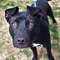 Adopt A Pet :: Rudy - Littleton, CO