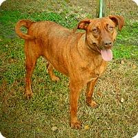 Adopt A Pet :: Lela aka Lulu - Newport, NC