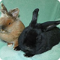 Adopt A Pet :: Arthur & Ellie - North Gower, ON