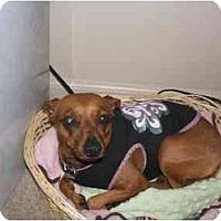 Adopt A Pet :: CINNAMON - SCOTTSDALE, AZ