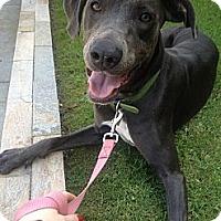 Adopt A Pet :: Bailey - Santa Monica, CA