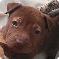 Adopt A Pet :: Little Bo Peep - fairytale - Phoenix, AZ
