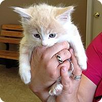 Adopt A Pet :: Pasadena - Troy, OH