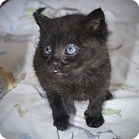 Adopt A Pet :: Billy - Xenia, OH