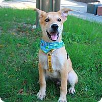 Adopt A Pet :: Kuwa - Temple City, CA