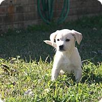 Adopt A Pet :: Dom - Destrehan, LA