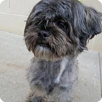 Adopt A Pet :: Duke - Morganville, NJ