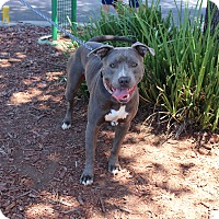 Adopt A Pet :: Cookie - Yuba City, CA