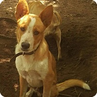 Adopt A Pet :: Boomer - Charlestown, RI