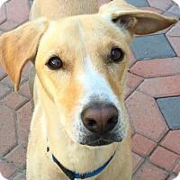 Adopt A Pet :: Sandi - Anaheim, CA