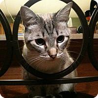 Adopt A Pet :: Jasper - Laguna Woods, CA