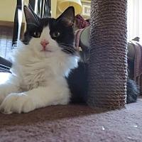Adopt A Pet :: Misha - Eagan, MN