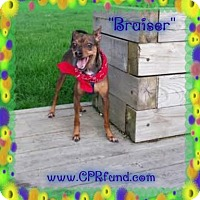 Adopt A Pet :: Bruiser - Lowell, IN