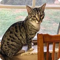 Adopt A Pet :: Mummy - Wichita, KS