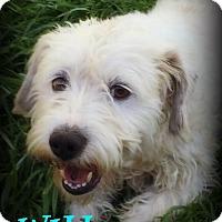 Adopt A Pet :: WILL - Phoenix, AZ