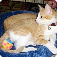Adopt A Pet :: Tillie - Richmond, VA