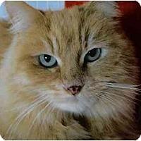 Adopt A Pet :: Dyna - Brea, CA