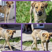 Adopt A Pet :: Nenya - Homestead, FL