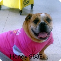 Adopt A Pet :: Honey - Greencastle, NC
