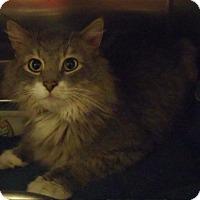 Adopt A Pet :: Raya - Edmonton, AB