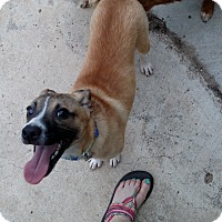 Adopt A Pet :: Aidan - Simi Valley, CA