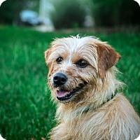 Adopt A Pet :: Darla - Chesterfield, VA