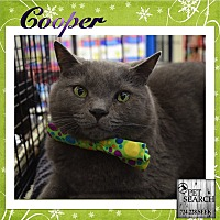 Adopt A Pet :: Cooper - Washington, PA
