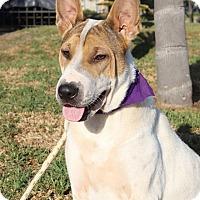 Adopt A Pet :: Agata - Irvine, CA
