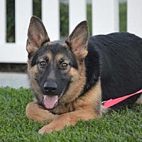 Adopt A Pet :: Belle - Mira Loma, CA