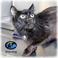 Adopt A Pet :: Smokey - Howell, MI