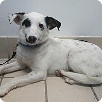 Adopt A Pet :: Elroy - Elyria, OH