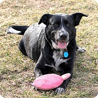 Adopt A Pet :: Ziza - Lisbon, IA