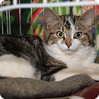 Adopt A Pet :: Meelah (Spayed) - Marietta, OH
