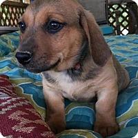 Adopt A Pet :: RYAN - East Windsor, CT