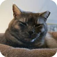 Adopt A Pet :: Trey - Centreville, VA