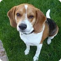 Adopt A Pet :: Marshall2 - Phoenix, AZ