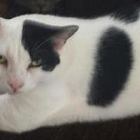 Adopt A Pet :: Bessie - Chino, CA