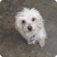 Adopt A Pet :: Pauline - Simi Valley, CA