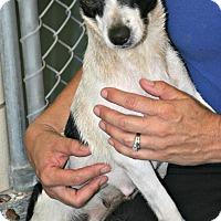 Adopt A Pet :: Sangria - Lufkin, TX