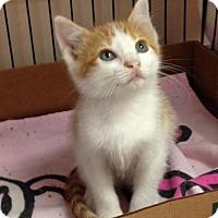 Adopt A Pet :: Kohl - East Brunswick, NJ