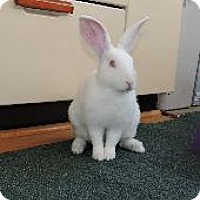 Adopt A Pet :: Spirit - Woburn, MA