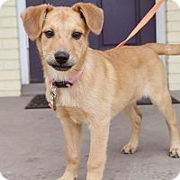 Adopt A Pet :: Rosie - PORTLAND, ME