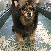 Adopt A Pet :: Peanut - Rathdrum, ID