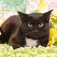 Adopt A Pet :: Jolene - Sterling Heights, MI
